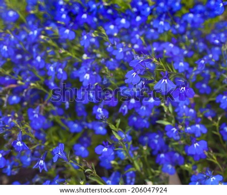 Summer Flower background, Beautiful blue flowers made with color filters, spring bloom, retro background - stock photo