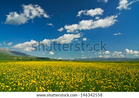 Summer flower field and blue sky - stock photo