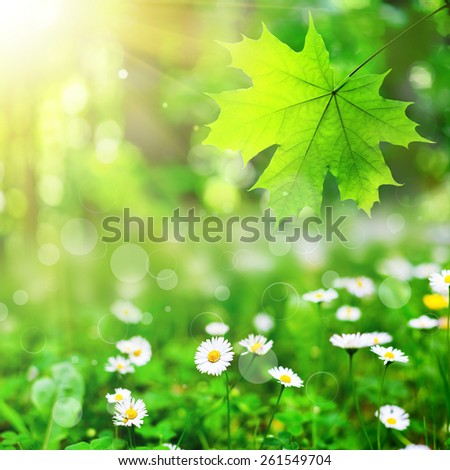 summer flower field  on the sky and forest. nature abstract - stock photo