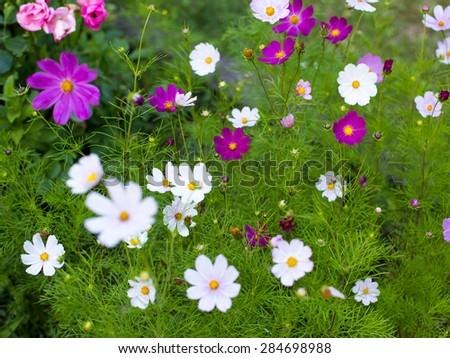 Summer flower garden - stock photo
