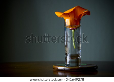 Summer Flower in a Glass of Water