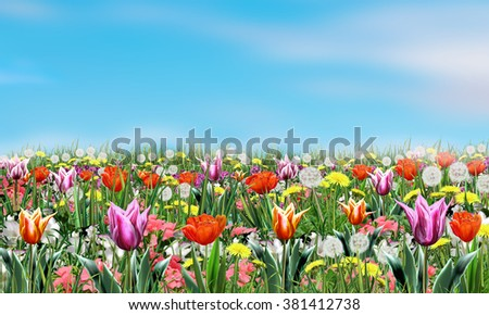 Summer flowers and light blue sky. Poster, Digital Illustration, landscape. Summer Holiday background with spring flowers and sky. For Art, web, print,