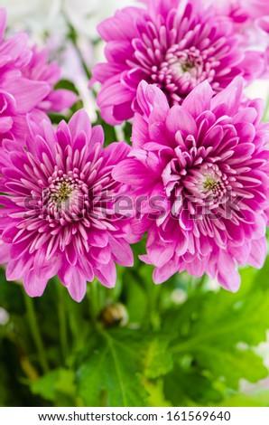 Summer flowers bouquet - stock photo