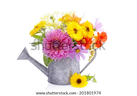 Summer flowers in a decorative watering can isolated on white. Gardening. Isolated on white. - stock photo