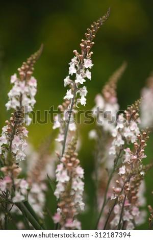 Summer flowers in a garden in Ireland - stock photo