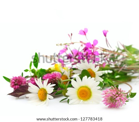 Summer flowers isolated on white with copy space - stock photo