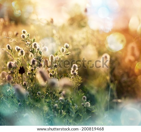 summer flowers meadow with  vintage Instagram  filter effect  - stock photo