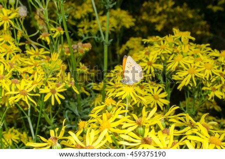 summer flowers with gossamer-winged butterfly - stock photo