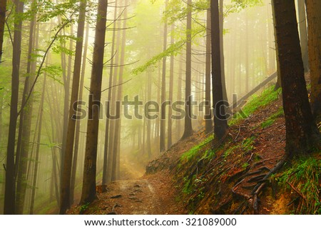 summer fog in the forest