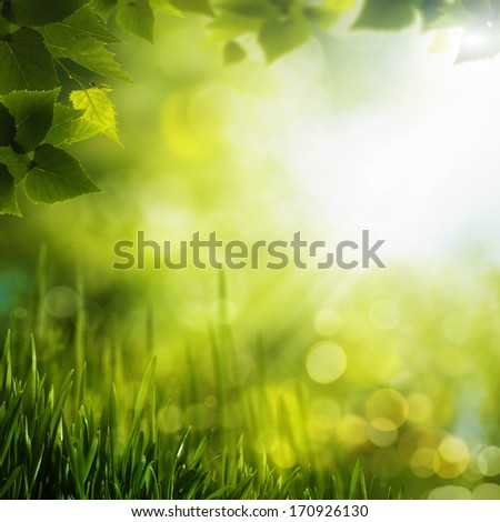 Summer foliage. Abstract seasonal backgrounds for your design - stock photo