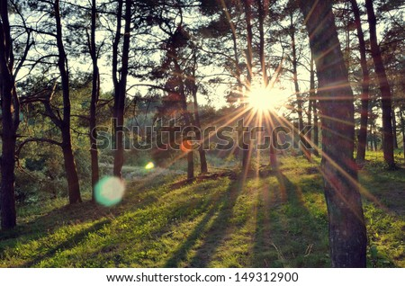 summer forest at sunset - stock photo