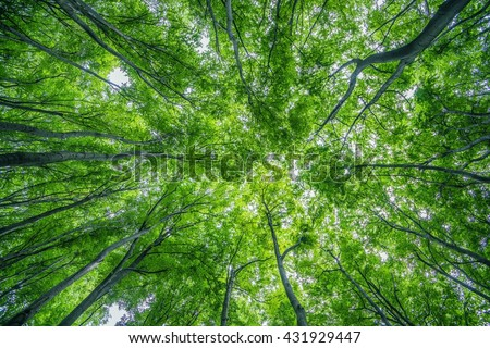 Summer Forest Canopy Nature Photo Background Forestry