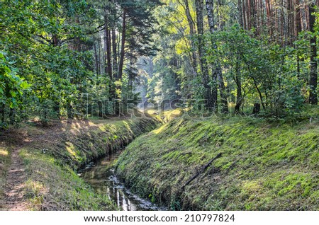summer forest on sunny day - stock photo