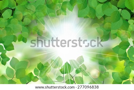 Summer fresh leaf green leaves with sun rays - stock photo