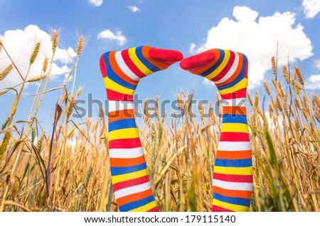Summer fun. Female legs on sky and wheat field background. Freedom, travel and vacation lifestyle concept. Image with woman legs in funny stockings and copy space on blue sky - stock photo