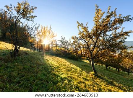 Summer garden at sunny morning - stock photo