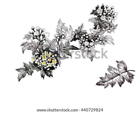 Summer garden blooming flowers monochrome illustration. - stock photo