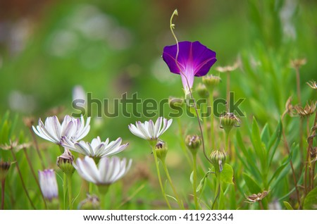 Summer grass and macro flower. Nature composition. - stock photo