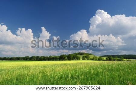 Summer grassland / Green summer meadow - stock photo