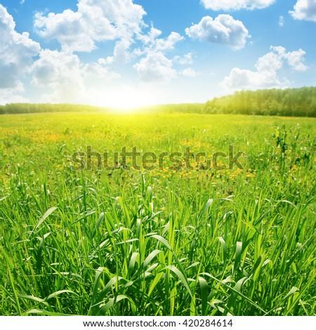 Summer green field, blue sky and sunlight. - stock photo