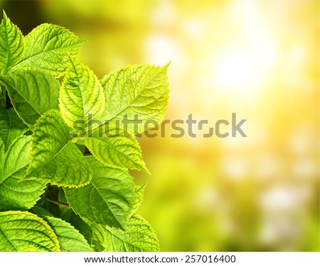Summer green leaves on green background - stock photo