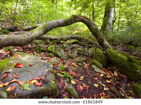 Summer green wild mountain forest landscape - stock photo