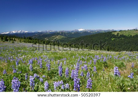 Summer hiking view from manning park. - stock photo