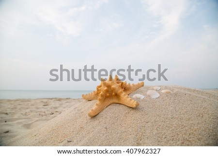 Summer holiday ,starfish on the beach for your vaction 2017