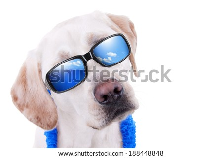 Summer holiday vacation Labrador dog in sunglasses with reflection of ocean and sky isolated with copy space - stock photo