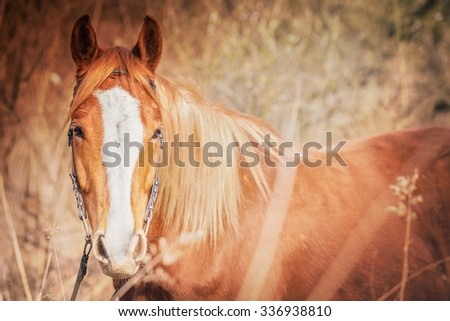 summer horizontal photo of beautiful brown horse outside with nice background