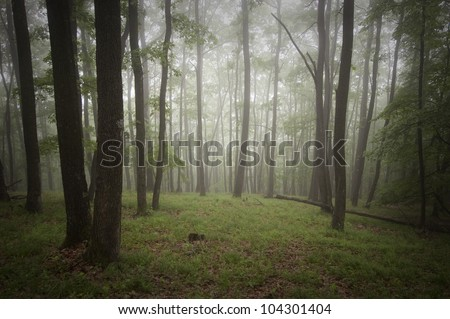 summer in green forest - stock photo