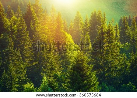 Summer in the Alpine Forest. Wonderful Day Full of Sun and Scenic Spruce Forest. - stock photo