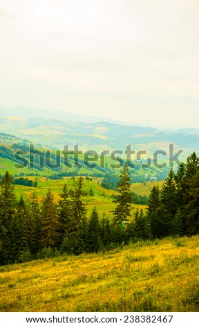 summer in the mountains. Carpathian, Ukraine, Europe.