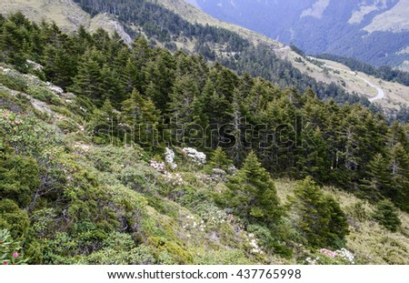 Summer in the mountains. Rhododendron flowers and alpine pine - stock photo