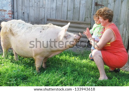 Summer in the village, a woman with a child want to touch a pig, which is on the table. - stock photo