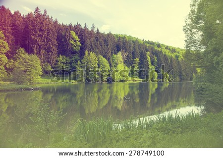 Summer lake near the forest. - stock photo