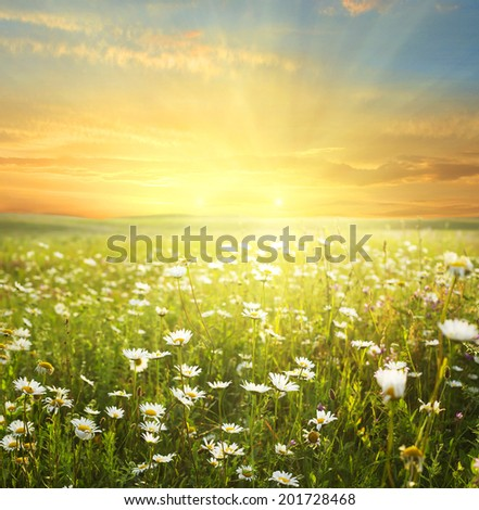 summer landscape - stock photo