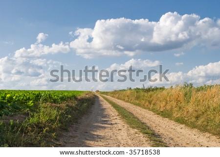 Summer landscape background - stock photo