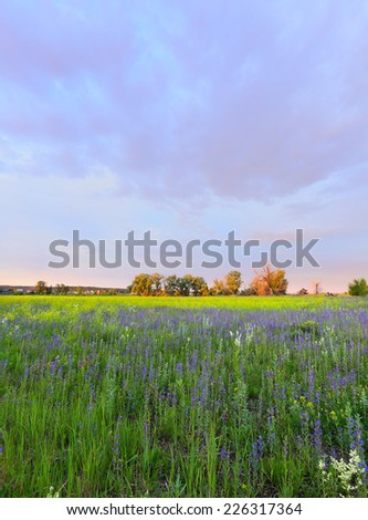summer landscape beautiful bright sunset over the meadow and oak forest on the horizon  - stock photo