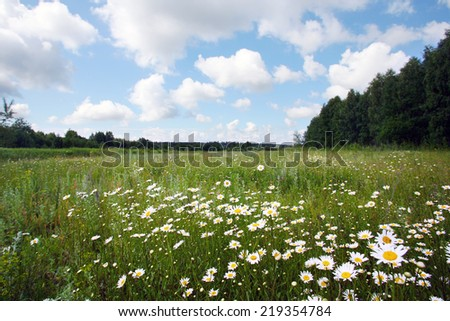 summer landscape beautiful white clouds over a flowering meadow on a sunny day - stock photo