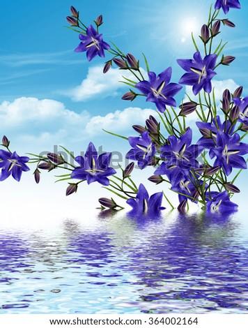 Summer landscape. bell Flower. Blue flowers on a background of blue sky - stock photo