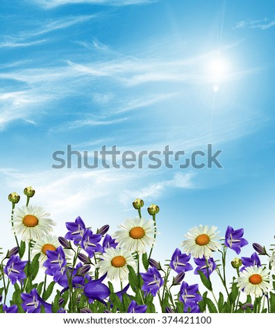 Summer landscape. bell Flower. wildflowers daisies and bluebells - stock photo