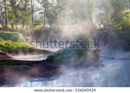 summer landscape dense fog in the oak grove near the river at dawn - stock photo