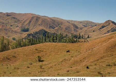 summer landscape, drought conditions, East Coast, North Island, New Zealand  - stock photo