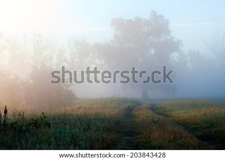 summer landscape fabulous misty morning and the rising sun in the oak grove - stock photo