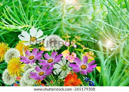 Summer landscape. Flowers. - stock photo