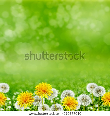 Summer landscape. Flowers