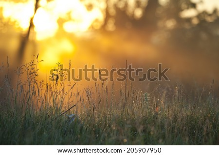 summer landscape foggy morning in an oak grove at dawn - stock photo