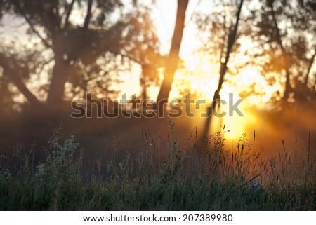 summer landscape foggy morning in an oak grove at dawn - stock photo