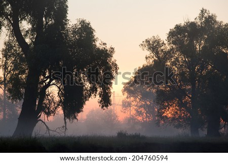 summer landscape foggy morning in an oak grove at dawn and high-voltage power line on the horizon - stock photo
